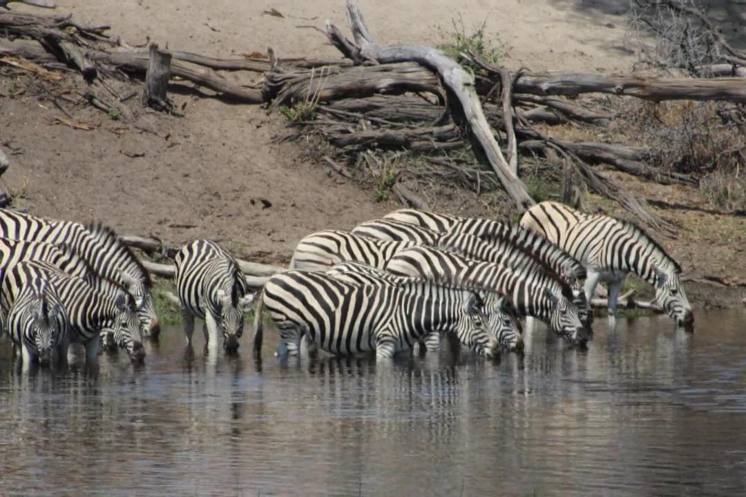 safari time-lapse botswana